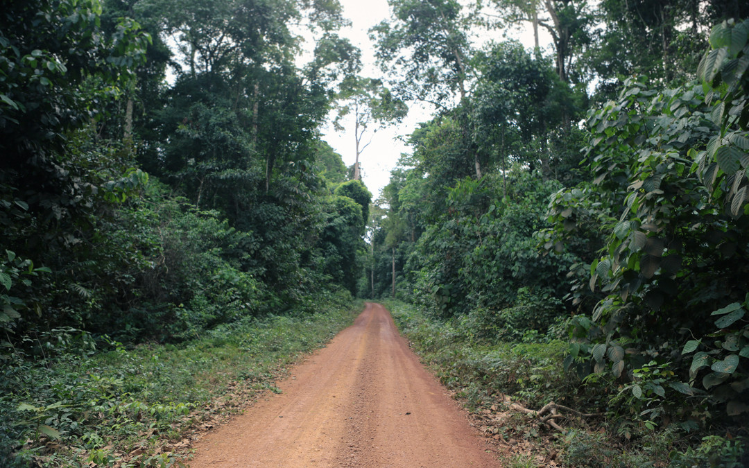 A road into the Amazon